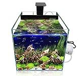GankPike Würfel LED Aquarium-Komplett-Set, 31 Liter inklusive LED-Beleuchtung,...