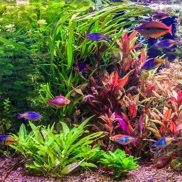 Einsteiger-Aquarium Foto