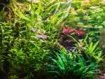 Aquarium Pflanzen Foto