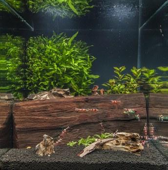 Nano Aquarium Foto